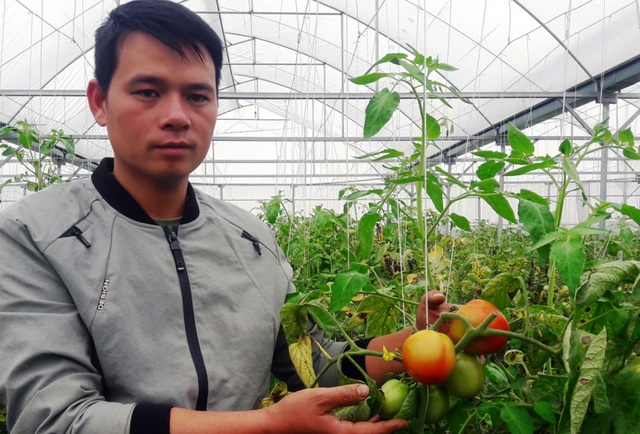 Chàng trai thu trăm triệu đồng từ ...cà chua, hoa hồng và dưa kim hoàng hậu - 1