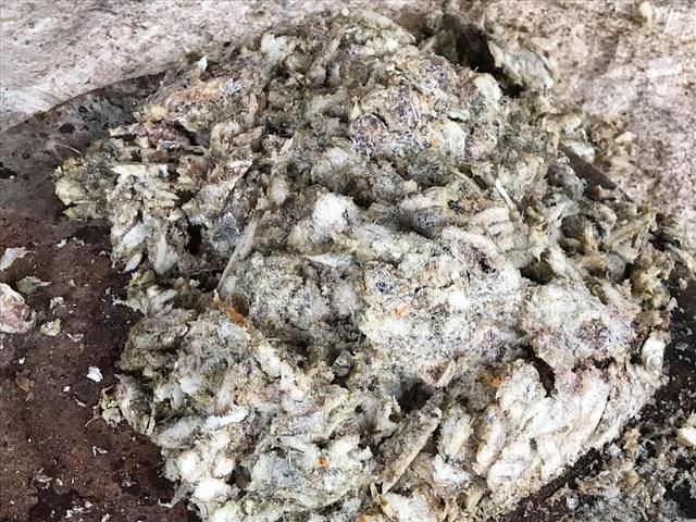 Nuôi lươn đồng không dùng bùn, chàng trai trẻ thu hàng trăm triệu/năm - 4