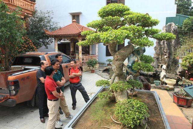 Choáng ngợp những vườn cây triệu đô độc nhất, vô nhị của đại gia Việt - 1