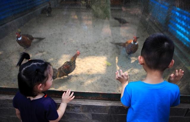 Vườn thú, công viên Hà Nội đông nghịt người trong ngày nghỉ lễ - 4
