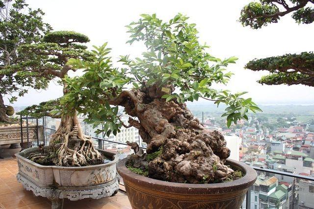 Choáng ngợp những vườn cây triệu đô độc nhất, vô nhị của đại gia Việt - 14