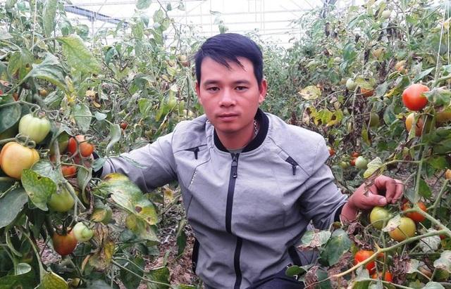 Chàng trai thu trăm triệu đồng từ ...cà chua, hoa hồng và dưa kim hoàng hậu - 4