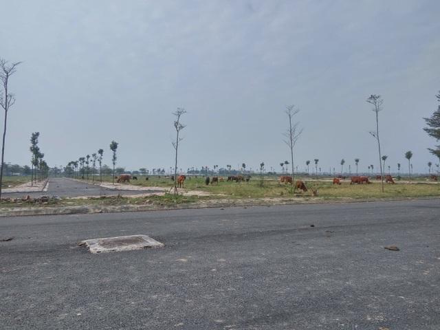 Thủ tướng yêu cầu xử lý đất dự án đô thị 2.000 ha bỏ hoang ở Hà Nội - 1