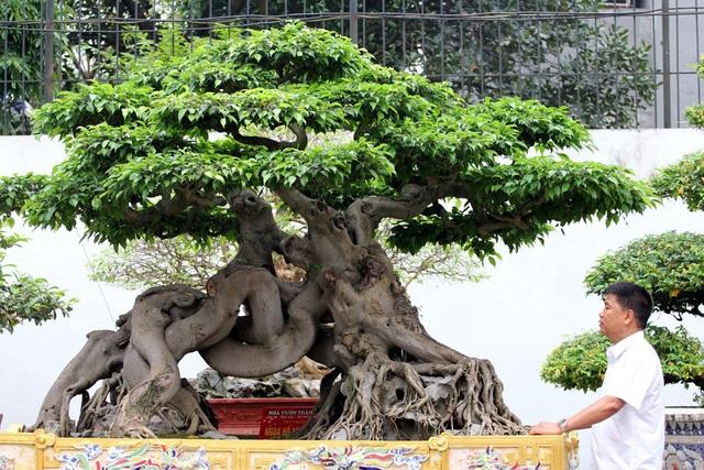 Đột nhập vườn cây trị giá cả chục triệu USD của đại gia đất Tổ - 10