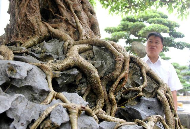 Đột nhập vườn cây trị giá cả chục triệu USD của đại gia đất Tổ - 11