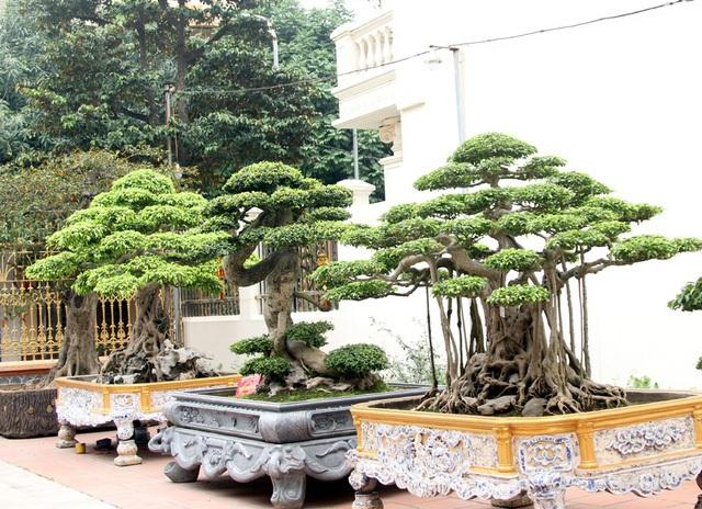 Đột nhập vườn cây trị giá cả chục triệu USD của đại gia đất Tổ - 12
