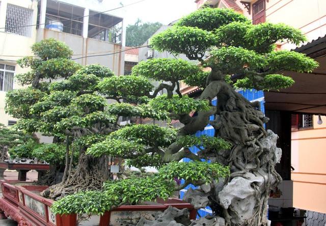 Đột nhập vườn cây trị giá cả chục triệu USD của đại gia đất Tổ - 2