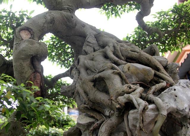 Đột nhập vườn cây trị giá cả chục triệu USD của đại gia đất Tổ - 3