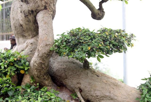 Đột nhập vườn cây trị giá cả chục triệu USD của đại gia đất Tổ - 6