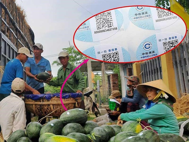 Dưa hấu Việt dán tem Trung Quốc là không sai - 1
