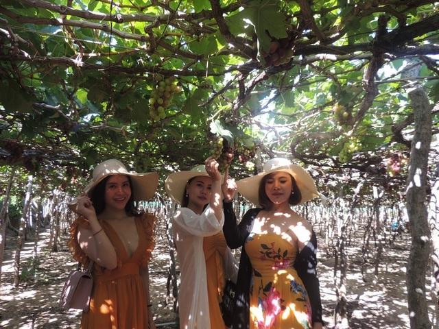 Trải nghiệm Lễ hội nho và vang ở vùng đất đầy nắng và gió - 2