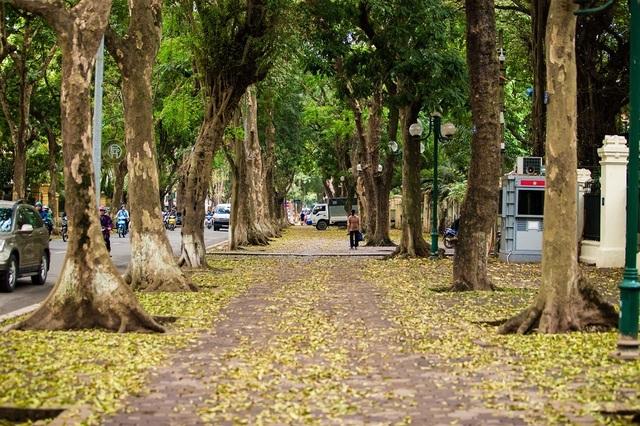Ngẩn ngơ trước vẻ đẹp của phố phường Hà Nội mùa lá rụng - 1