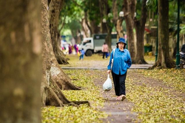 Ngẩn ngơ trước vẻ đẹp của phố phường Hà Nội mùa lá rụng - 10
