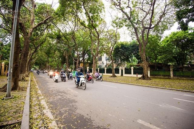 Ngẩn ngơ trước vẻ đẹp của phố phường Hà Nội mùa lá rụng - 13