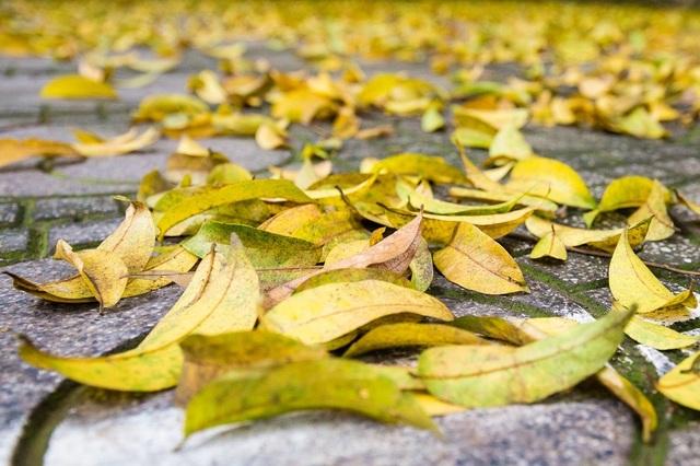 Ngẩn ngơ trước vẻ đẹp của phố phường Hà Nội mùa lá rụng - 2