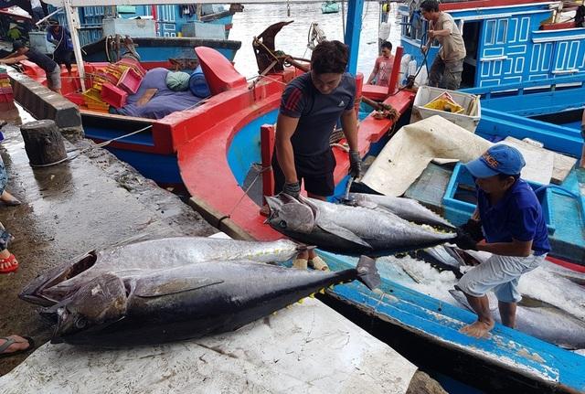 """Ngư dân """"méo mặt"""" vì mất mùa cá ngừ đại dương ở Trường Sa - 2"""