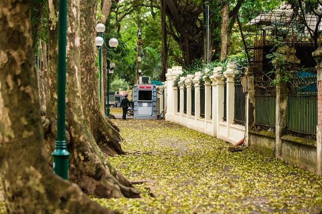 Ngẩn ngơ trước vẻ đẹp của phố phường Hà Nội mùa lá rụng - 3