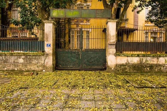 Ngẩn ngơ trước vẻ đẹp của phố phường Hà Nội mùa lá rụng - 6