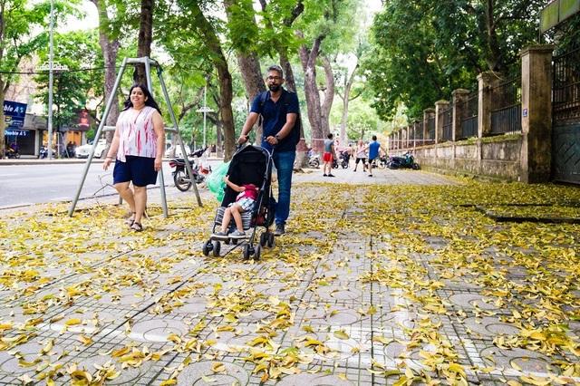 Ngẩn ngơ trước vẻ đẹp của phố phường Hà Nội mùa lá rụng - 7