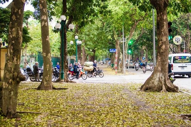 Ngẩn ngơ trước vẻ đẹp của phố phường Hà Nội mùa lá rụng - 9