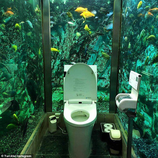 Cửa hàng cafe chi hơn 6,6 tỉ lắp đặt bể cá khổng lồ quanh nhà vệ sinh - 2