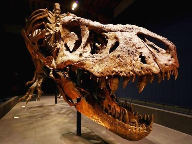 Công khai rao bán hóa thạch khủng long độc nhất thế giới giá gần 70 tỷ đồng - 1