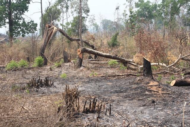 """Phát hiện hơn 4ha rừng bị """"chặt phá, đốt trụi"""" - 1"""