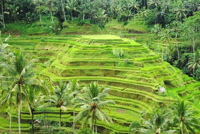 Ngoài biển đảo, Bali còn vô số điểm check in đẹp như mơ! - 15