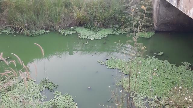 Đà Nẵng: Gần 2 km kênh đổi màu xanh bất thường và bốc mùi - 3