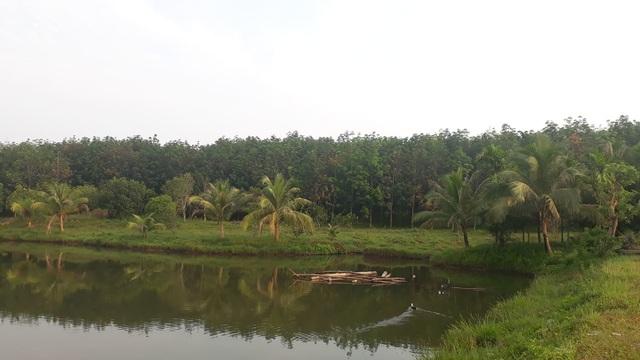 Công ty lâm nghiệp để mất gần 1.000 ha rừng, Giám đốc chiếm đất làm trang trại? - 2