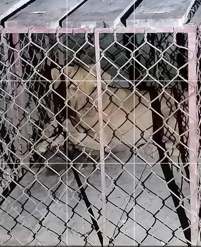 Một nữ lao công bị chó cắn trọng thương - 1