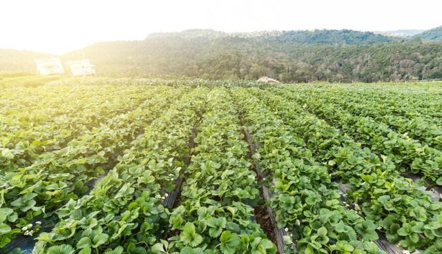 Đầu tư nghỉ dưỡng sinh thái kết hợp nông nghiệp – đà phát triển mới cho nghỉ dưỡng ven đô - 3