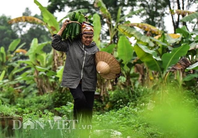 Vào rừng hái lá chuối bán 10.000 đồng/kg hết vèo - 8
