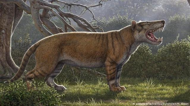 Phát hiện sư tử khổng lồ thời cổ đại ở Kenya - 1