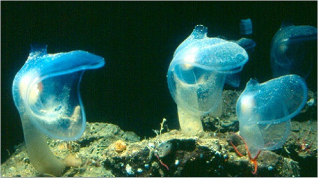 Phát hiện sinh vật chưa từng thấy ở đáy sâu nhất Ấn Độ Dương - 2