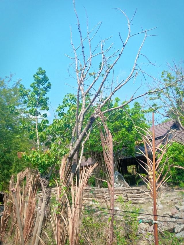 Bi hài vụ chặt cây trên đất đã mua, nguy cơ ngồi tù: Cận cảnh tang vật có gì? - 5