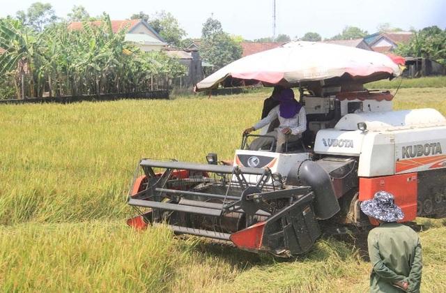 """Người dân """"xứ gió Lào"""" vã mồ hôi lao động giữa nắng nóng rát mặt! - 4"""