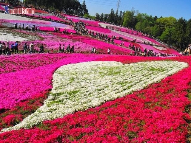 Du lịch Nhật Bản mùa hè trọn gói từ 12,9 triệu đồng - 2