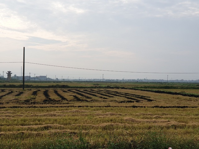 Bị đốt gần 1.000 cuộn rơm vì không đồng ý đóng tiền bảo kê cánh đồng - 2