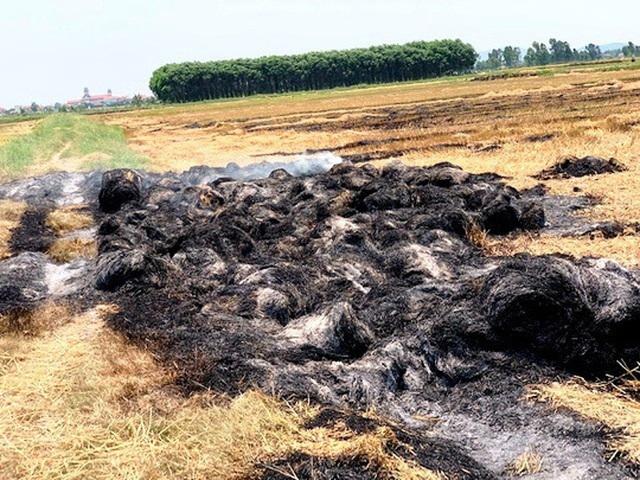 Bị đốt gần 1.000 cuộn rơm vì không đồng ý đóng tiền bảo kê cánh đồng - 1