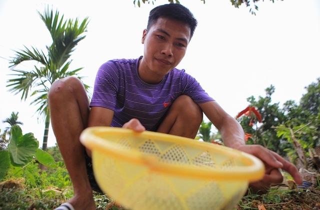 Săn trứng kiến làm món ăn đặc sản ở ngoại thành Hà Nội - 7