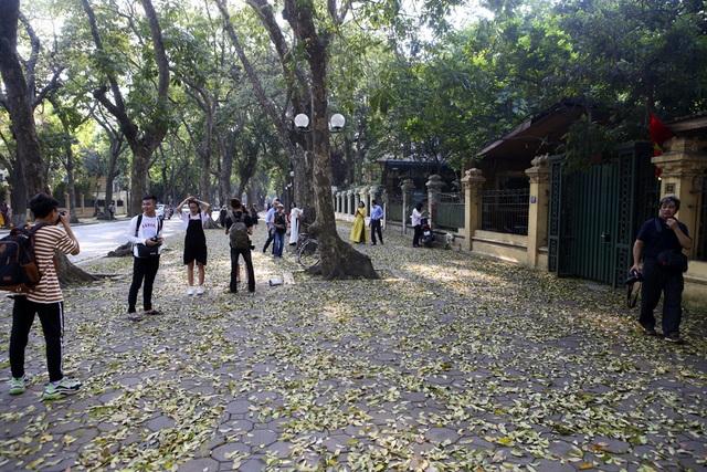 Phố lá vàng rơi siêu lãng mạn ở Hà Nội thu hút người chụp ảnh - 1