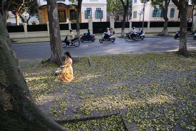 Phố lá vàng rơi siêu lãng mạn ở Hà Nội thu hút người chụp ảnh - 7