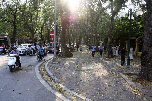 Phố lá vàng rơi siêu lãng mạn ở Hà Nội thu hút người chụp ảnh - 8