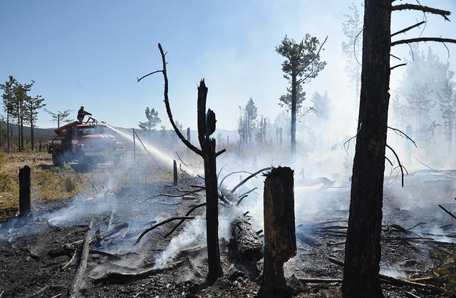 Ông Putin bận xử lý cháy rừng trước cuộc gặp lịch sử với ông Kim - 2
