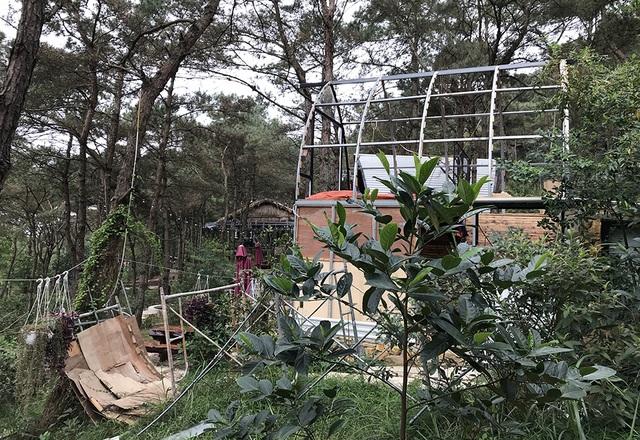 Sóc Sơn đang phá dỡ các công trình vi phạm trên đất rừng - 9
