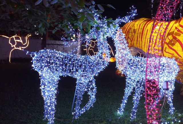 Hấp dẫn với lễ hội ánh sáng lần đầu tiên tại thành phố biển Sầm Sơn - 6