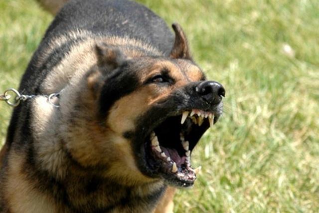 Bé trai 14 tuổi tử vong do chó dại cắn - 1
