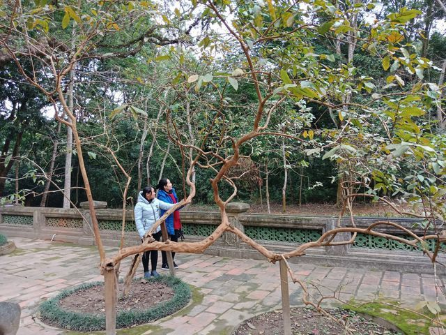 Close to smiling guava trees, the 300-year-old Banyan tree moves once