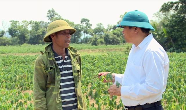 Người trồng sắn lao đao vì cây trồng nhiễm bệnh lạ - 1